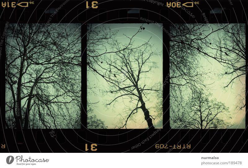3in1 Baum Himmel Natur Winter Wald dunkel Umwelt Landschaft Bewegung Park Kunst Eis Angst Klima verrückt trist