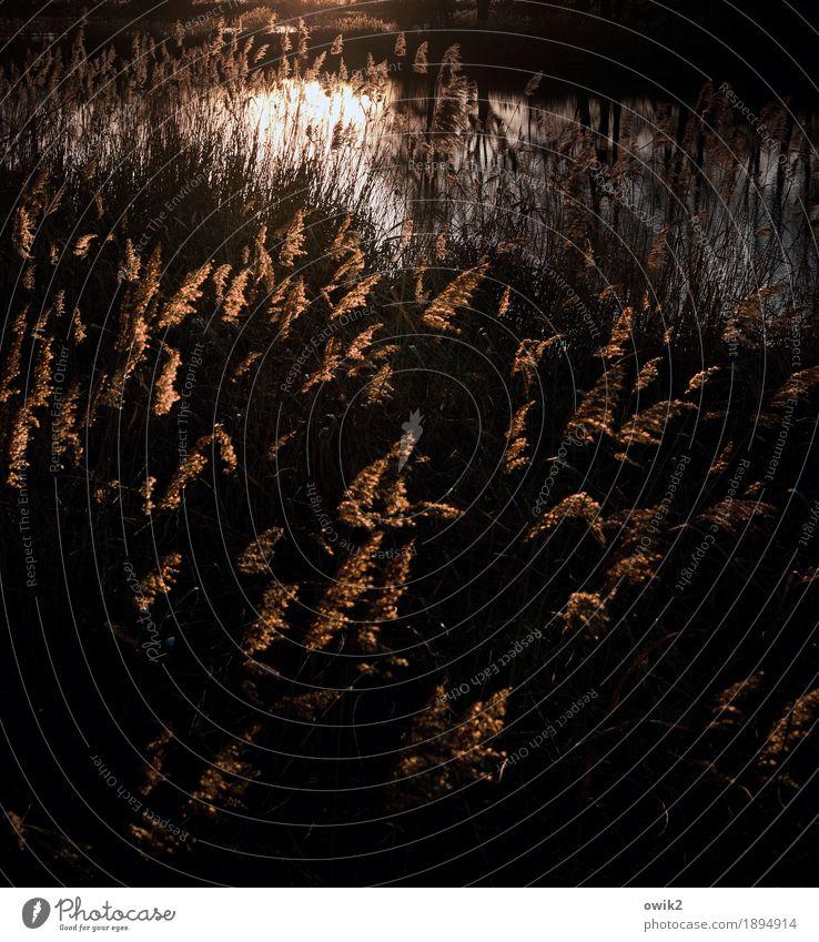 Irrlichter Umwelt Natur Landschaft Pflanze Wasser Herbst Klima Schönes Wetter Sträucher Wildpflanze Röhricht Seeufer Teich Bewegung leuchten dunkel glänzend