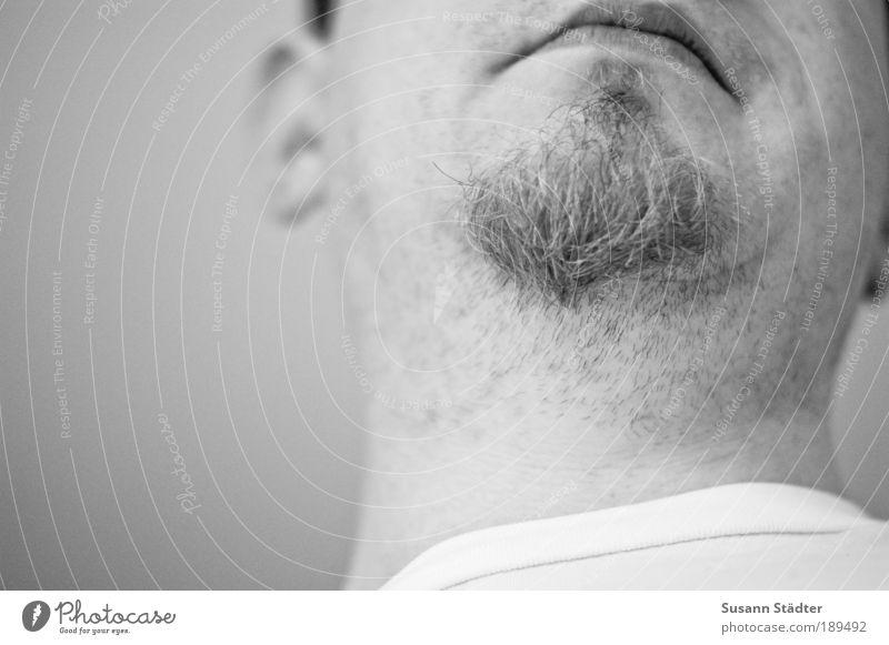 unrasiert maskulin Mann Erwachsene Kopf Haare & Frisuren Gesicht Ohr Mund Lippen Bart Wachstum Barthaare Bartstoppel Kinnbart blond Mundwinkel T-Shirt weiß Hals