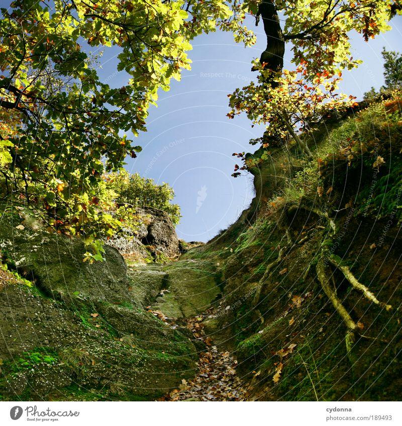 Kurz davor Leben harmonisch Wohlgefühl Erholung ruhig Ausflug Ferne Expedition Umwelt Natur Landschaft Wolkenloser Himmel Herbst Baum Wald Felsen