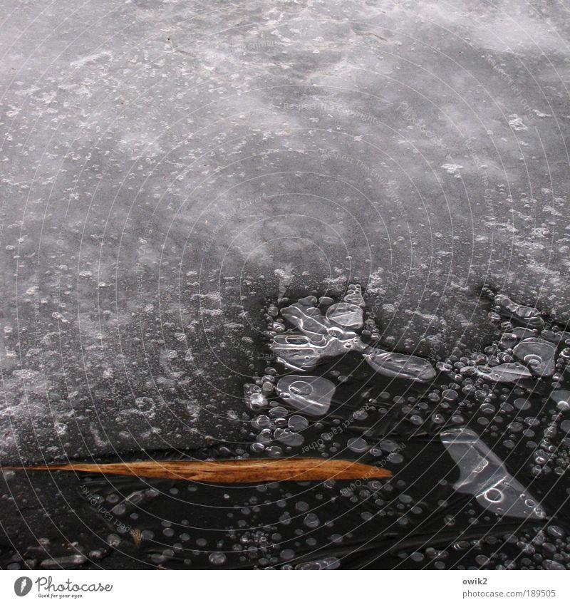 Requiem Natur Wasser Winter ruhig Blatt schwarz kalt grau Traurigkeit See Eis braun Umwelt Trauer Frost