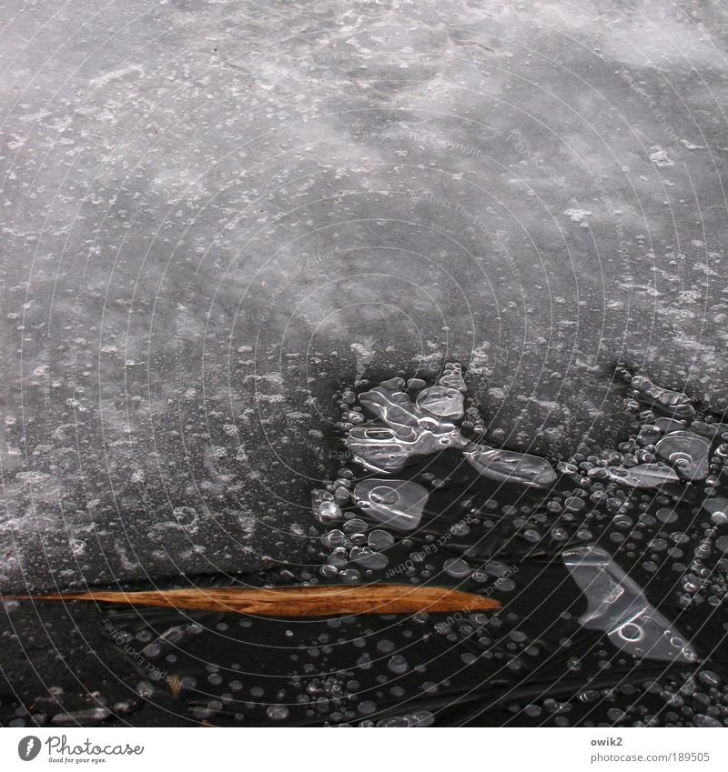 Requiem Umwelt Natur Urelemente Wasser Winter Klima Schönes Wetter Eis Frost Blatt See Luftblase frieren verblüht dehydrieren dünn braun grau schwarz ruhig