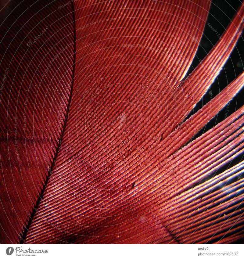Vom Huhn Natur weiß schön rot schwarz abstrakt Stil klein Linie glänzend elegant Ordnung Design natürlich ästhetisch Muster