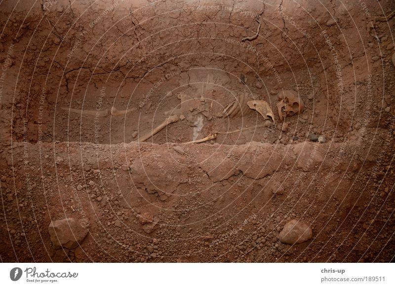Skelett im Grab Mensch Leben Kopf gruselig Trauer Tod Angst Krieg verscharrt verscharren Peru Südamerika Anatomie Paddel Teufel Ausgrabungen Archäologie