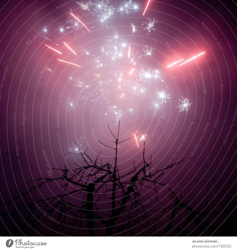 tennineeightsevensixfivefour. Himmel schön Baum dunkel Umwelt Feste & Feiern Kraft rosa glänzend Stern Tanzveranstaltung einzigartig Romantik Show leuchten violett