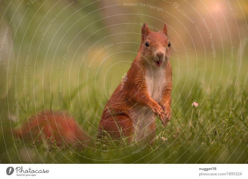 mein kleiner Freund 2 Natur Sommer grün rot Tier Tierjunges gelb Frühling Herbst Wiese Gras Garten braun orange Park Wildtier