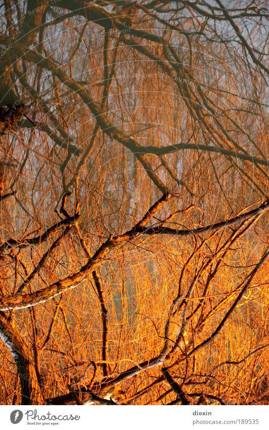 Rock for light harmonisch Wohlgefühl Zufriedenheit Erholung ruhig Wasser Sonnenlicht Winter Pflanze Baum Seeufer Flussufer Teich alt hängen leuchten nass