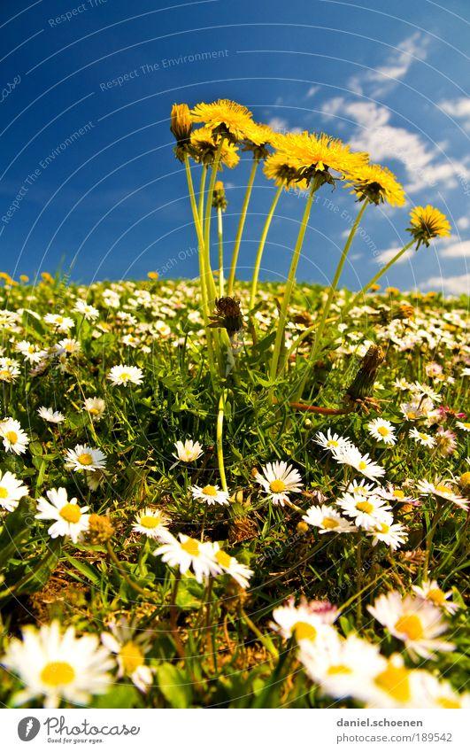 ... und jetzt was zum aufwärmen Natur schön weiß Sonne Blume blau Pflanze Sommer Ferien & Urlaub & Reisen gelb Wiese Blüte Gras Frühling Umwelt Ausflug