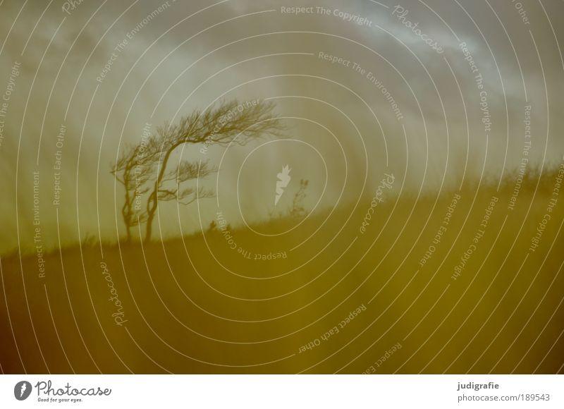 Weststrand Umwelt Natur Landschaft Pflanze Himmel Wolken Klima Wind Sturm Baum Gras Küste Ostsee bedrohlich dunkel natürlich wild Stimmung Endzeitstimmung