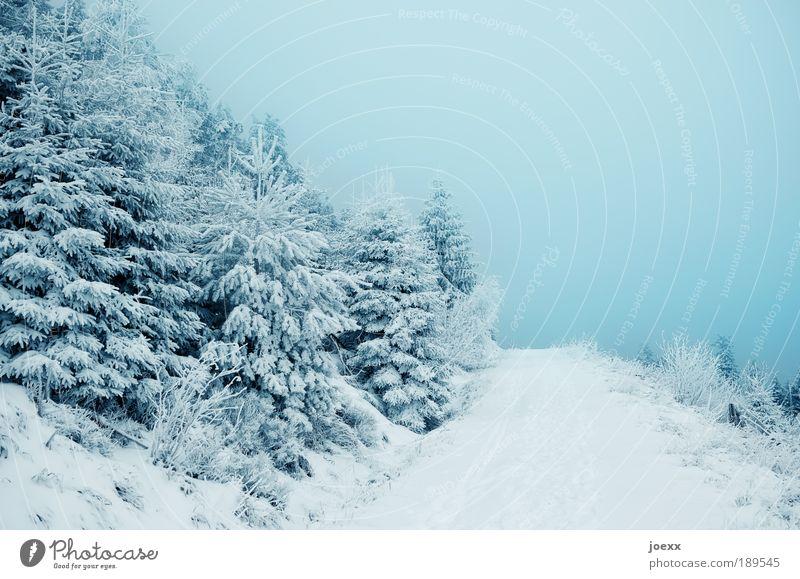 Ins Blaue hinein Natur Himmel Baum blau Winter Einsamkeit Wald kalt Schnee Erholung Wege & Pfade Nebel Hoffnung Schneelandschaft Ewigkeit Nadelwald