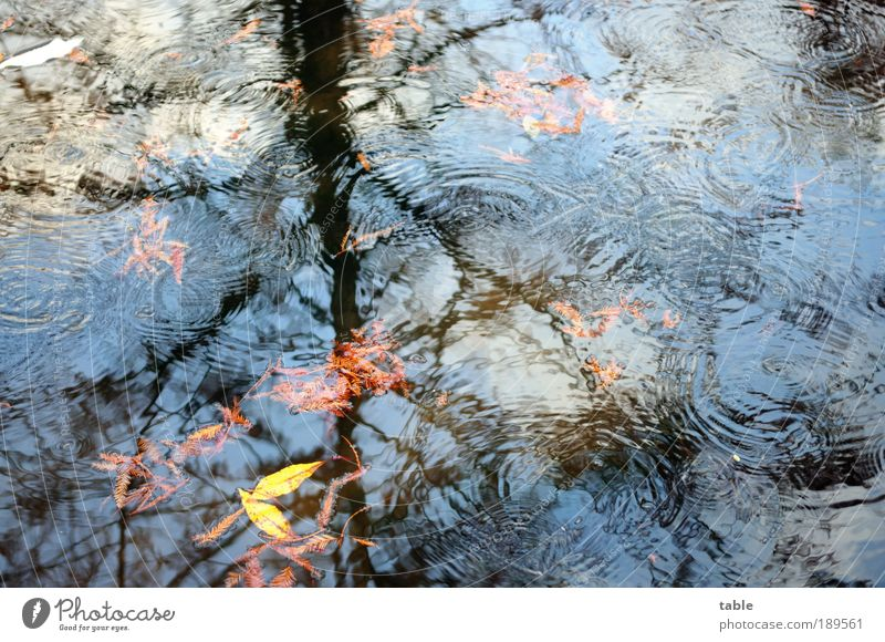 it`s raining . . . Umwelt Natur Landschaft Pflanze Urelemente Luft Wasser Wassertropfen Himmel Herbst Klima Wetter Regen Baum Blatt Park Wald Wellen Seeufer