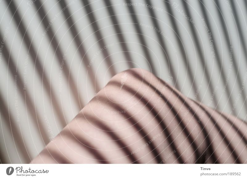 Lichtspielerei feminin Beine außergewöhnlich Haut Streifen gestreift Bildausschnitt Umrisslinie Knie Schattenspiel Jalousie Lichteinfall Körperteile Frauenbein