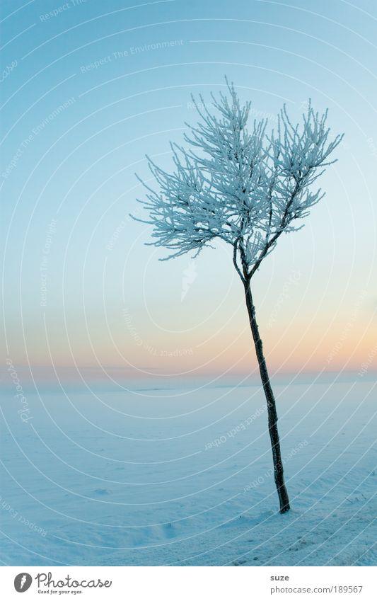 Eisprinz Umwelt Natur Landschaft Pflanze Urelemente Himmel Wolkenloser Himmel Horizont Winter Klima Nebel Frost Schnee Baum authentisch dünn hell kalt natürlich
