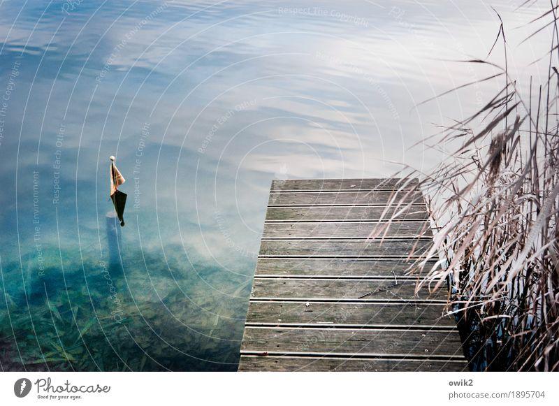 Baden gehen Umwelt Natur Landschaft Pflanze Wasser Herbst Sträucher Blatt Wildpflanze Röhricht Halm See Holz Freundlichkeit nass blau türkis Idylle einladend