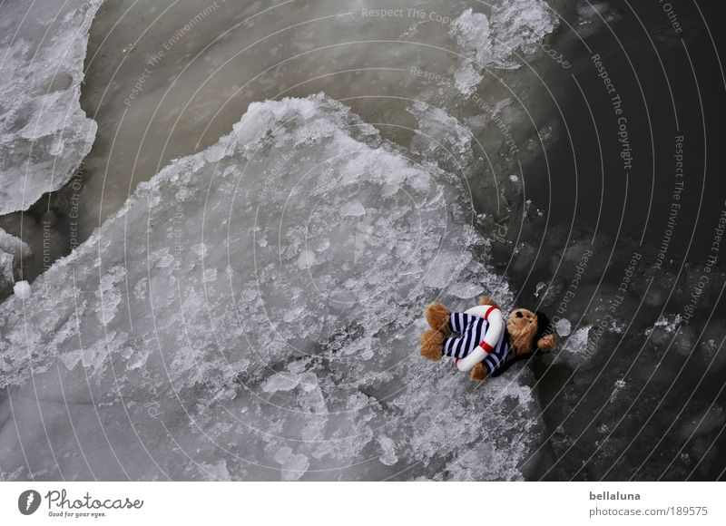Bootsmann auf der Scholle Natur Wasser Winter Einsamkeit kalt Eis Wetter Umwelt Vogelperspektive gefährlich Frost bedrohlich Klima Schönes Wetter Flussufer