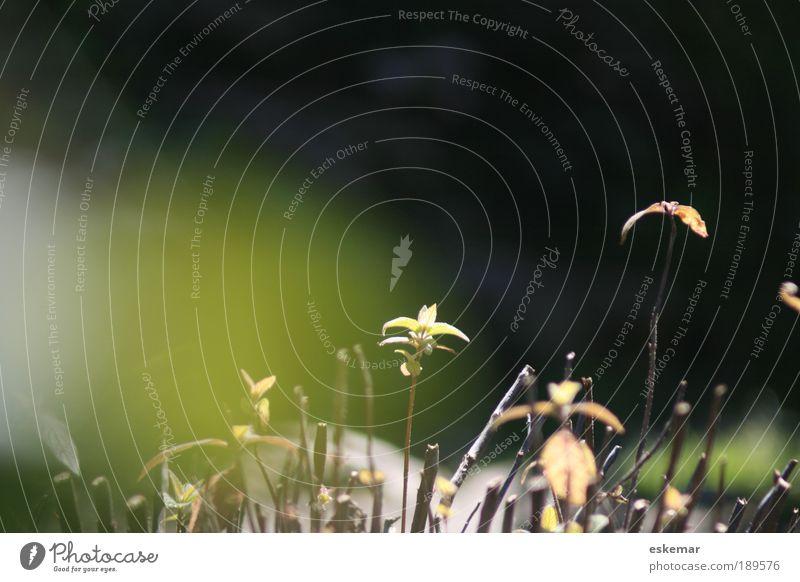 Erwachen Natur grün Pflanze ruhig Blatt Leben Frühling Zufriedenheit Stimmung Hoffnung ästhetisch neu Ast zart Neugier Schönes Wetter