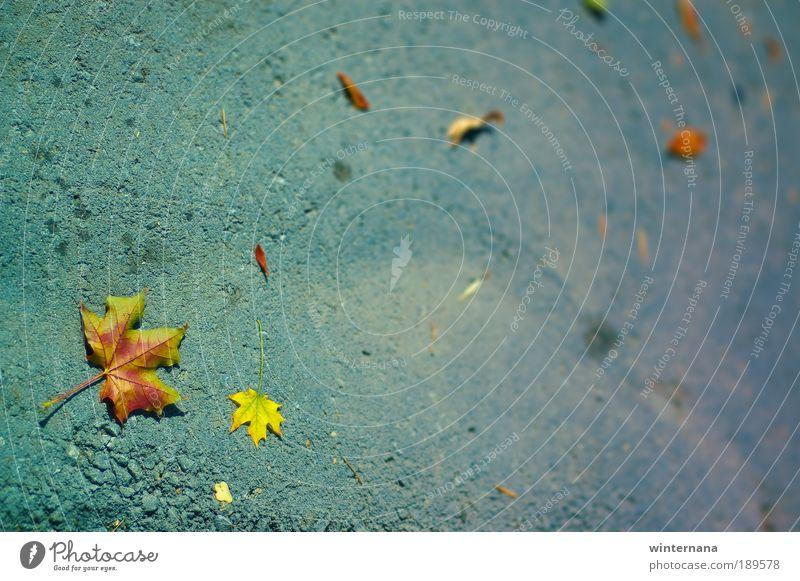 Natur Pflanze Blatt Umwelt Traurigkeit Gefühle Park träumen Erde Coolness Hoffnung Glaube selbstbewußt Optimismus Weisheit Tatkraft