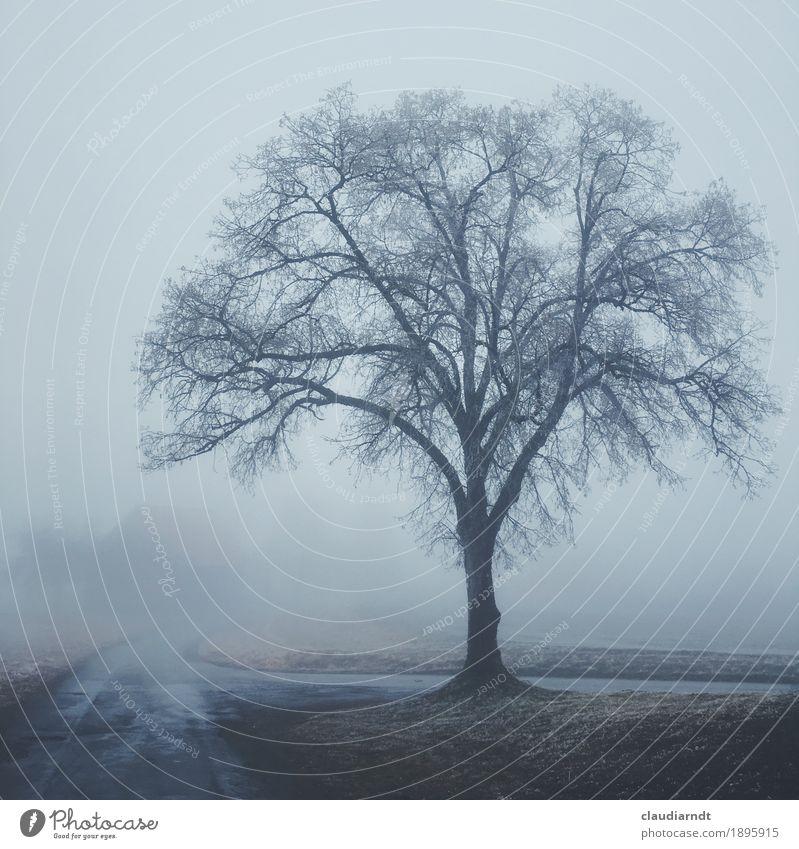 Friedhofslinde Umwelt Natur Landschaft Pflanze Winter schlechtes Wetter Nebel Eis Frost Baum Linde Feld Dorf Menschenleer Wege & Pfade dunkel gruselig kalt
