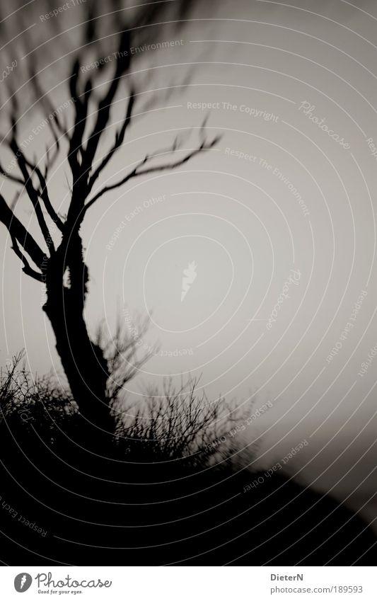 Wind Natur Himmel Baum Pflanze Herbst abstrakt Schwarzweißfoto Strukturen & Formen Inspiration Gegenlicht