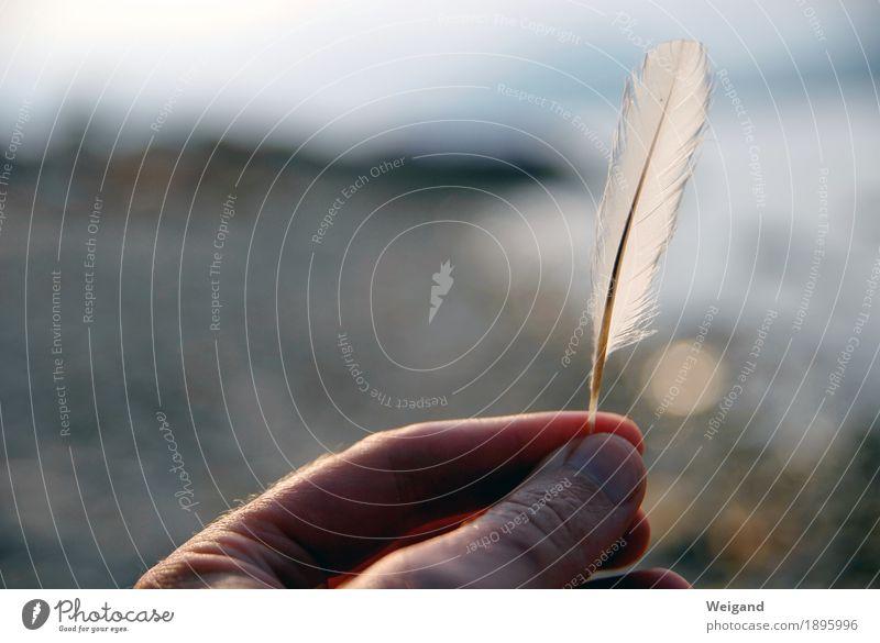 federschwer harmonisch Zufriedenheit Sinnesorgane Erholung ruhig Meditation Winter Hand Finger Denken Kraft Willensstärke Mut Leidenschaft Akzeptanz Vertrauen