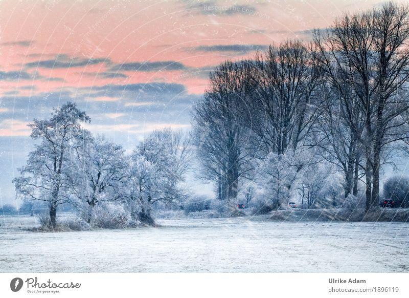 Schneegestöber Umwelt Natur Landschaft Himmel Wolken Sonne Sonnenaufgang Sonnenuntergang Sonnenlicht Winter Eis Frost Schneefall Baum Feld Hammewiesen Gras