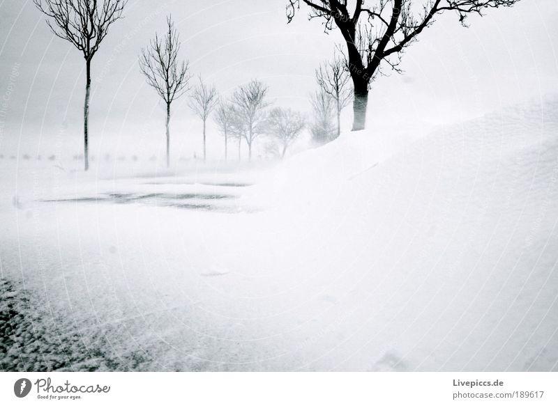 Schneesturm auf Rügen Winter Straße kalt Landschaft Kraft Macht Wut Sturm Unwetter Natur Aggression toben rebellisch