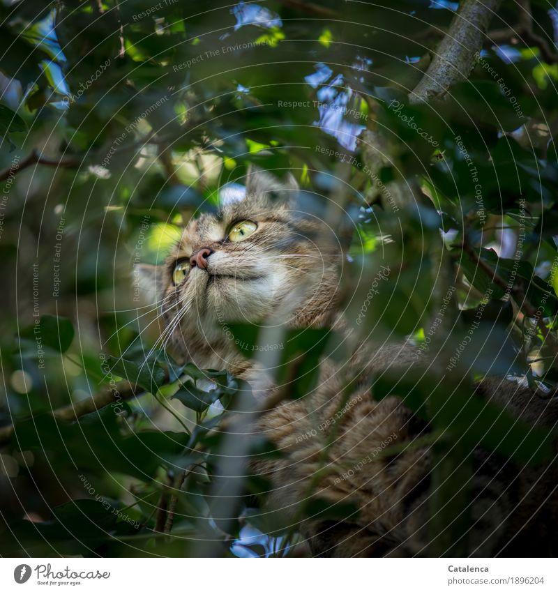 Risiko | verklettert Natur Pflanze Tier Himmel Sommer Schönes Wetter Baum Blatt Zweige u. Äste Efeu Garten Wiese Haustier Katze 1 Jagd sportlich blau braun gelb