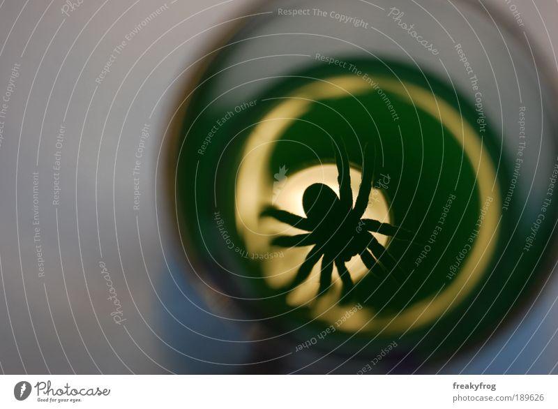 Der Blick ins Glas Spinne 1 Tier außergewöhnlich bedrohlich dunkel grün Sorge Schmerz Sehnsucht Einsamkeit Hemmung Entsetzen gefährlich Verzweiflung verstört