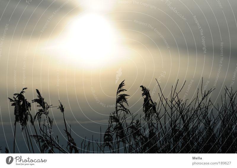Wintersonne Umwelt Natur Landschaft Pflanze Himmel Sonne Sonnenaufgang Sonnenuntergang Klima Klimawandel Wetter Gras Wiese Feld Seeufer leuchten Wachstum
