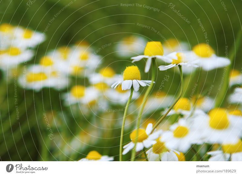 Wildwuchs Natur Pflanze Sommer Blume Blatt ruhig Erholung Ernährung Frühling Blüte Gesundheit Zufriedenheit natürlich frisch Freundlichkeit Tee