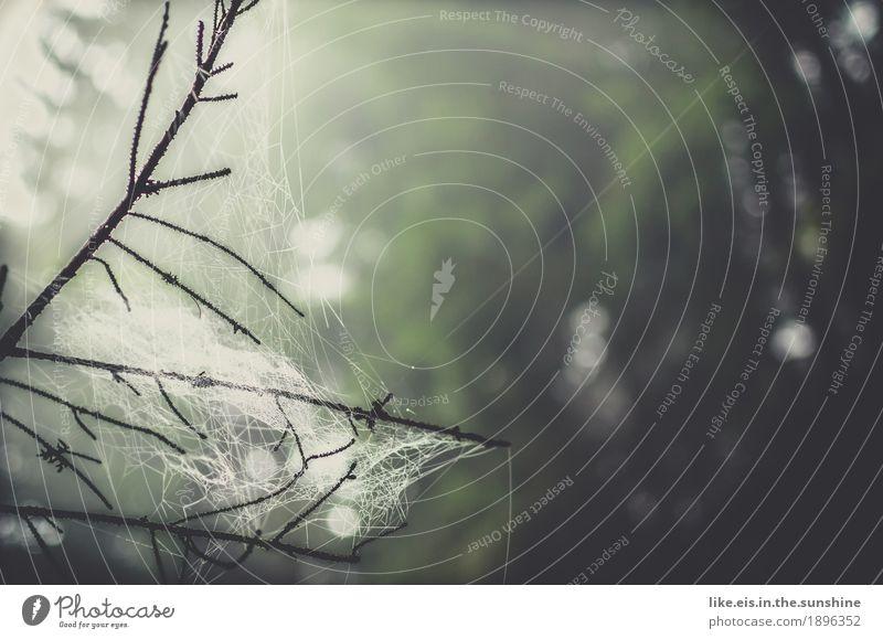 Wald- Magie Natur Pflanze grün Wasser Baum Umwelt Herbst Frühling Regen Nebel frisch Wassertropfen Ast Urelemente Tau