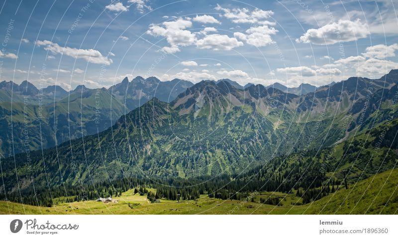 Blick vom Fellhorn Himmel Natur Ferien & Urlaub & Reisen Pflanze blau Sommer grün Baum Landschaft Erholung Wolken Ferne Berge u. Gebirge Umwelt natürlich Gras