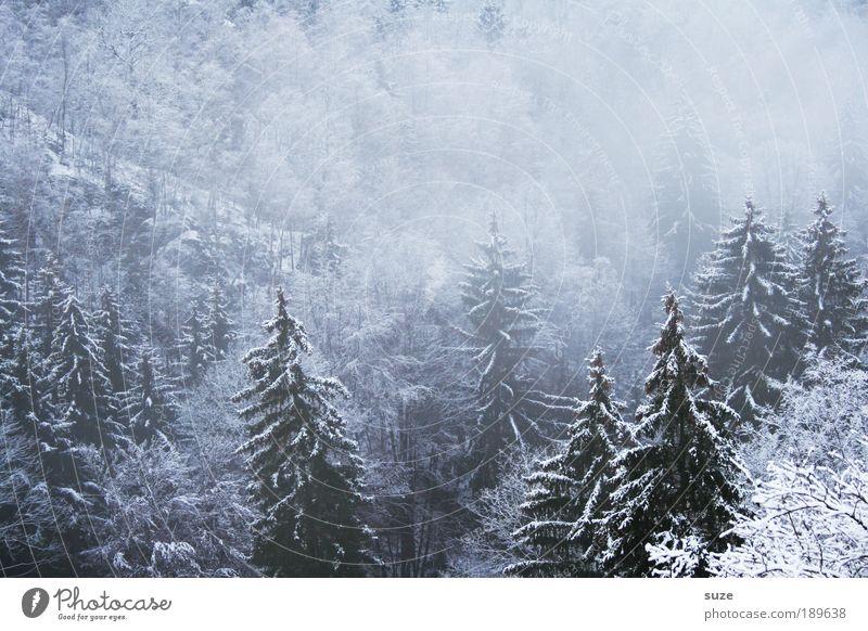 Geisterwald II Natur weiß Pflanze Baum Winter Landschaft Wald Umwelt dunkel kalt Schnee träumen Eis Klima Nebel authentisch
