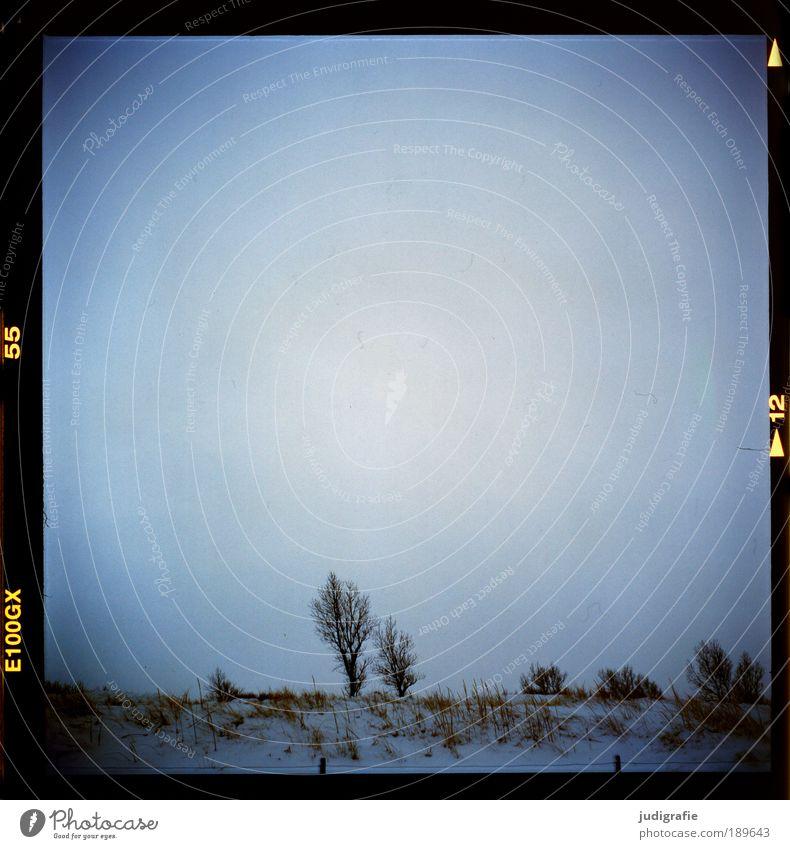 Paar Umwelt Natur Landschaft Pflanze Himmel Winter Klima Baum Küste Ostsee kalt natürlich Stimmung Partnerschaft Darß Weststrand Düne Farbfoto Außenaufnahme