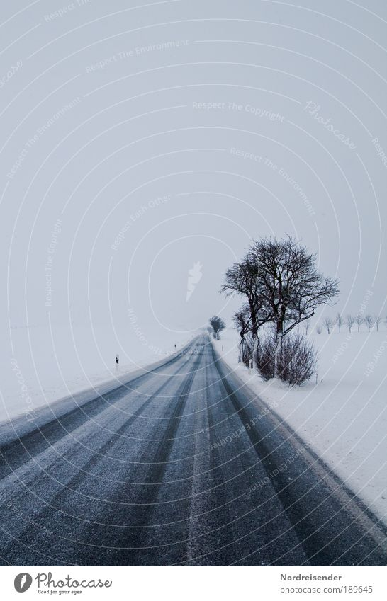 Winterblues Natur Baum Winter Umwelt Landschaft dunkel Straße kalt Schnee Gefühle Wege & Pfade Traurigkeit Wetter Klima Verkehr Urelemente