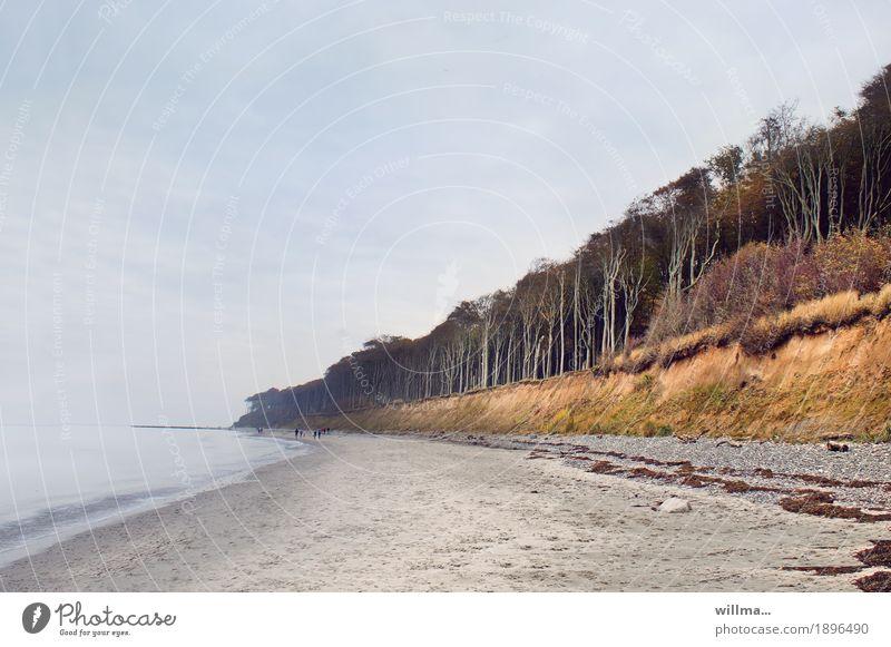 Wo der Wind das Gras mäht Landschaft Buche Wald Küste Strand Ostsee Nienhagen Gespensterwald Sandstrand Natur Textfreiraum Ostseeküste Buchenwald