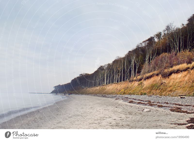 wo der wind das gras mäht... Natur Landschaft Strand Wald Küste Ostsee Buche Nienhagen Gespensterwald