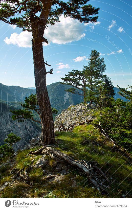 Rax'n'Roll Natur schön Baum grün blau Sommer Ferien & Urlaub & Reisen Einsamkeit Erholung Gras Berge u. Gebirge Zufriedenheit frei Kitsch Alpen Geruch