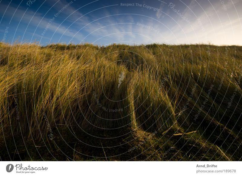 Dünengras 2 ruhig Natur Landschaft Pflanze Himmel Wolken Winter Schönes Wetter Wind Gras Sträucher Küste blau braun grün Einsamkeit duene nordsee