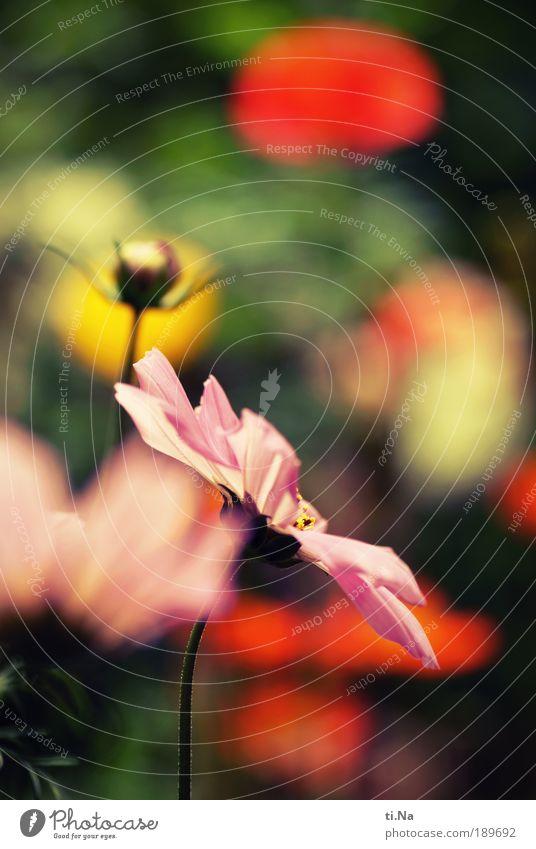 farbenfroh Glück harmonisch Wohlgefühl Zufriedenheit Duft Sommer Gartenarbeit Umwelt Natur Landschaft Frühling Schönes Wetter Blume Blatt Blüte Wildpflanze