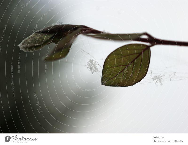 Schneeflöckchen weiß Röckchen Natur Himmel grün Pflanze Winter Blatt Wolken dunkel kalt Park Landschaft Luft Eis Wetter