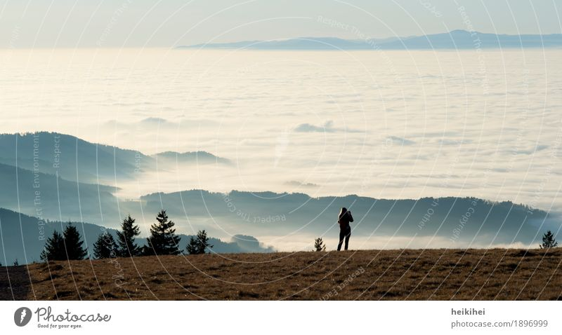 Über den Wolken Natur Landschaft Himmel Horizont Herbst Winter Schönes Wetter Nebel Baum Wiese Berge u. Gebirge Gipfel blau braun grün schwarz weiß Gefühle