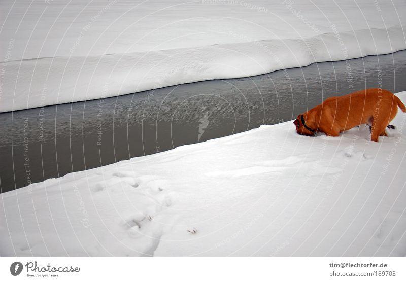 Die Nadel im Heuhaufen Wasser weiß Winter schwarz Einsamkeit Tier kalt Schnee Hund Eis hell braun Küste Umwelt frei