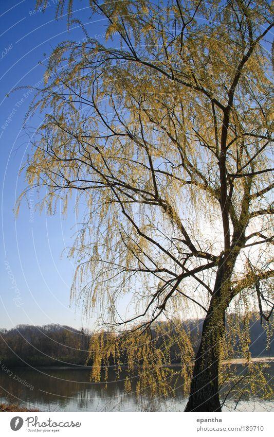 Natur Himmel Baum blau Pflanze Blatt gelb Frühling Park Landschaft elegant Umwelt frisch ästhetisch Fluss