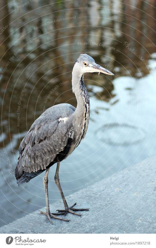 Orientierung | bin ich hier richtig? blau Wasser Tier Umwelt Leben Gebäude außergewöhnlich grau Stein braun Vogel Tourismus Wildtier stehen einzigartig Schönes Wetter