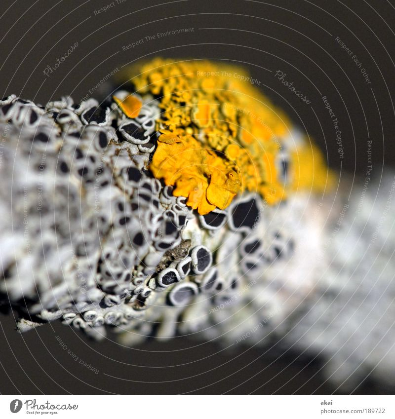 Flechten und Moose Natur Pflanze Winter gelb Herbst grau Umwelt Makroaufnahme