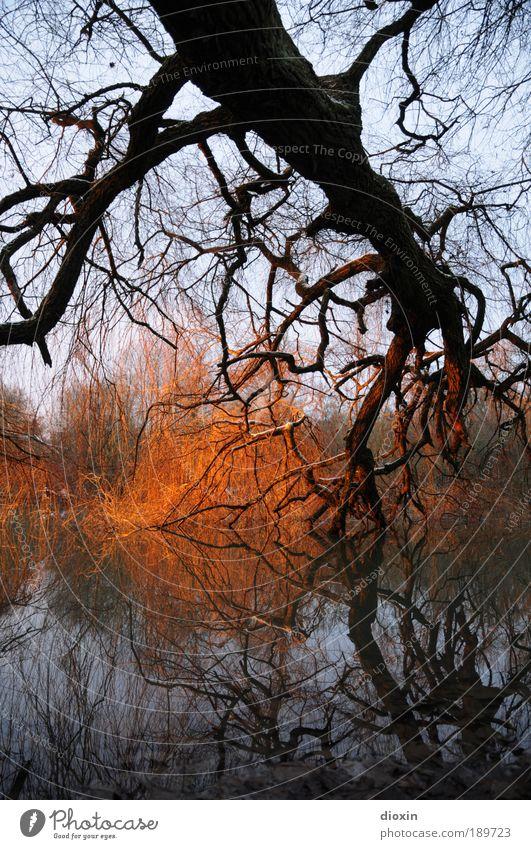 Das Licht am Ende des Stammes Umwelt Natur Landschaft Pflanze Urelemente Wasser Sonnenlicht Winter Wetter Baum Wildpflanze Park Wald Seeufer Flussufer leuchten