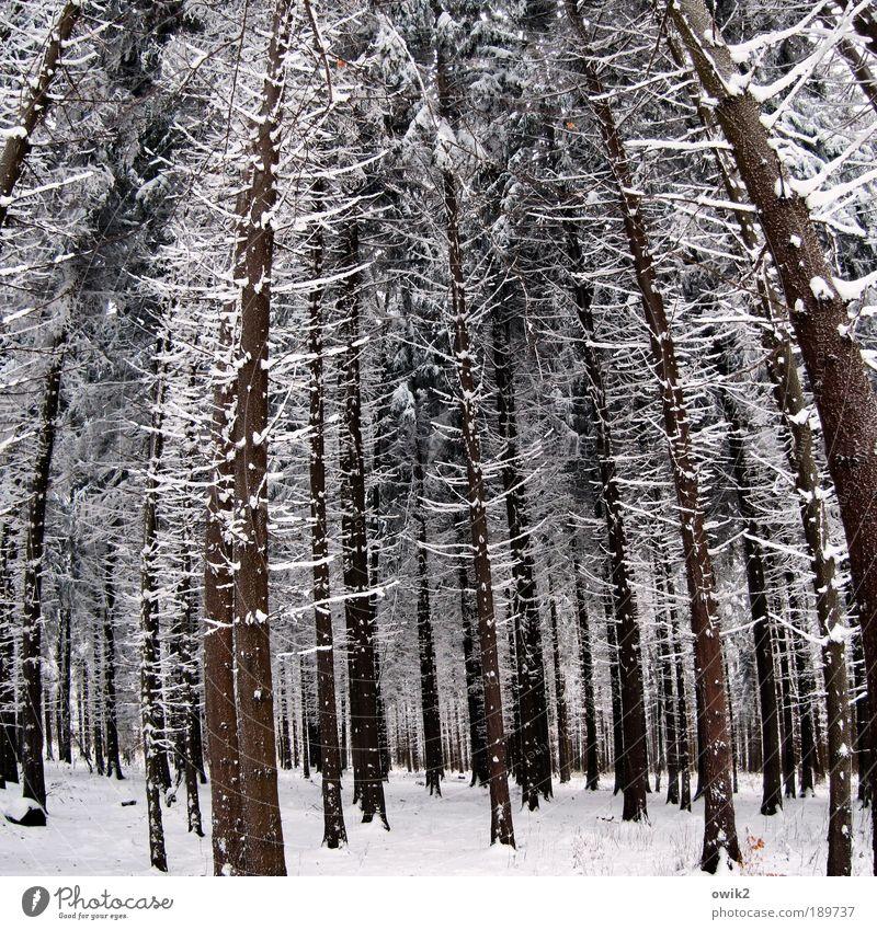 Winter kompakt Natur Baum Pflanze Wald Schnee Holz Landschaft Eis Deutschland Umwelt groß hoch Frost stehen