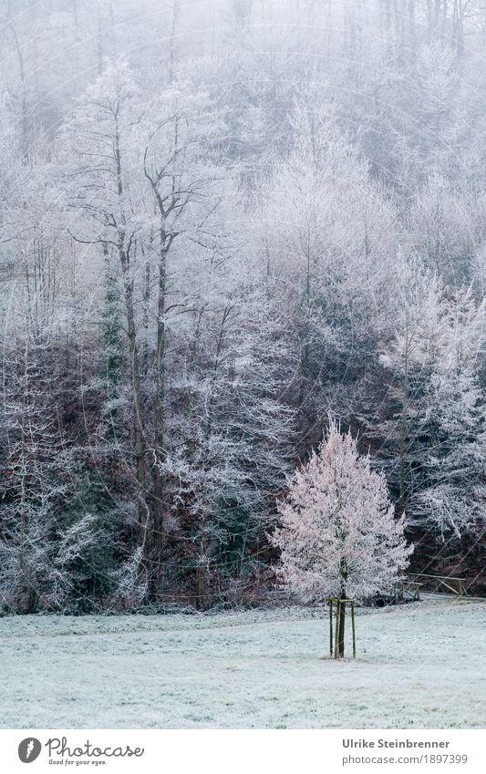 Bibber! Ferien & Urlaub & Reisen Tourismus Ausflug Winterurlaub Berge u. Gebirge wandern Umwelt Natur Landschaft Pflanze schlechtes Wetter Eis Frost Gras
