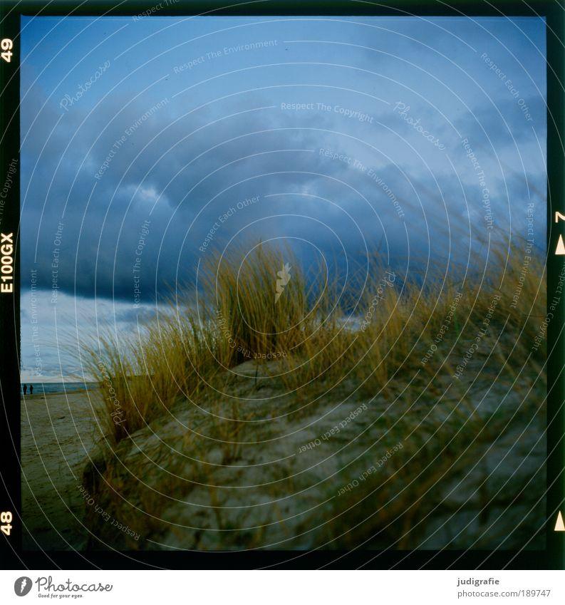 Weststrand Umwelt Natur Landschaft Pflanze Wasser Himmel Wolken Klima Unwetter Wind Sturm Gras Küste Strand Ostsee Meer bedrohlich dunkel natürlich wild
